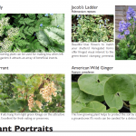 Residential Sustainable Master Plan: Plant Portraits